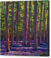 Bluebells And Forest Canvas Print