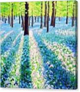 Bluebells In The Woodlands Canvas Print