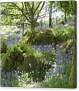 Bluebells On Dartmoor Canvas Print