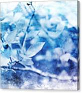 Blueberry Blues Canvas Print