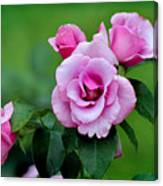 Blueberry Hill Roses Canvas Print