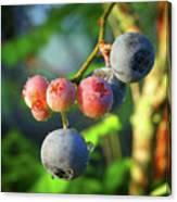 Blueberry Morning Canvas Print