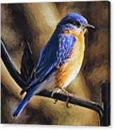 Bluebird Portrait Canvas Print
