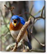 Bluebird Temper Canvas Print