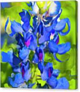 Bluebonnet Fantasy Canvas Print