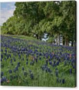 Bluebonnet Field Canvas Print