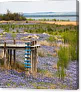 Bluebonnet Lakeshore Canvas Print