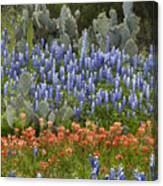 Bluebonnet Paintbrush And Prickly Pear Canvas Print