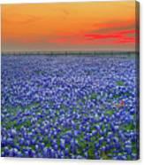 Bluebonnet Sunset Vista - Texas Landscape Canvas Print