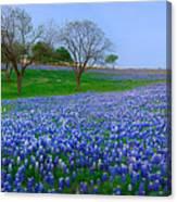 Bluebonnet Vista - Texas Bluebonnet Wildflowers Landscape Flowers  Canvas Print