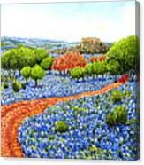 Bluebonnets Across Texas Canvas Print