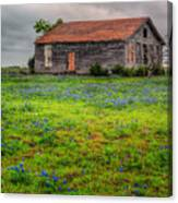 Bluebonnets And Abandoned Farm House Canvas Print
