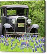 Bluebonnets And Fords Canvas Print