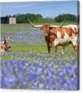 Bluebonnets And Longhorns 4 Canvas Print