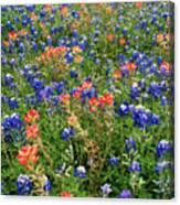 Bluebonnets And Paintbrushes 3 - Texas Canvas Print
