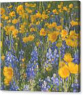 Bluebonnets And Wildflowers Canvas Print