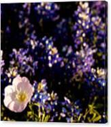 Bluebonnets With Buttercup Canvas Print