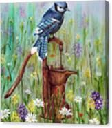Bluejay Peaceful Perch Canvas Print