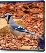 Bluejay Profile Canvas Print