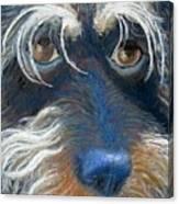 Bluenose Canvas Print