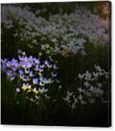 Bluets In Momentary Light Canvas Print