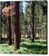 Bluff Lake Ca Fern Forest 2 Canvas Print