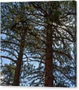 Bluff Lake Ca Through The Trees 3 Canvas Print