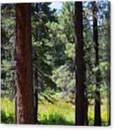 Bluff Lake Ca Through The Trees 7 Canvas Print