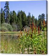 Bluff Lake Foliage 4 Canvas Print