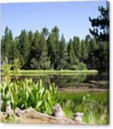 Bluff Lake Foliage 5 Canvas Print