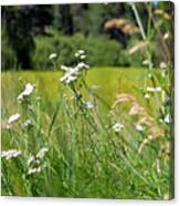 Bluff Lake Wild Flowers 1 Canvas Print