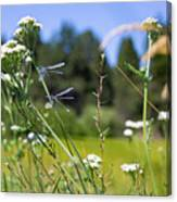 Bluff Lake Wild Flowers 2 Canvas Print