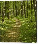 Bluff Trail Awenda Provincial Park Canvas Print