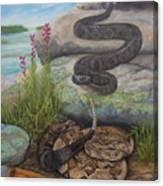 Bluffside Timber Rattler  Canvas Print