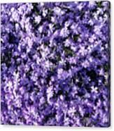 Bluish Carpet Canvas Print