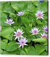 Blumen Des Wassers - Flowers Of The Water 22 Canvas Print