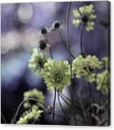 A Meadow's Blur Of Nature Canvas Print