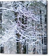 Blurred Shot Of Snow-covered Trees Canvas Print