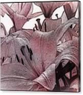 Blushing Lilies Canvas Print