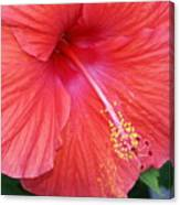 Blushing Stamen Canvas Print
