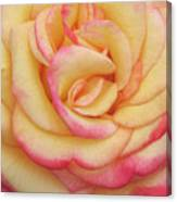 Blushing Yellow Rose Canvas Print