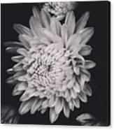 Bnw Flora Canvas Print