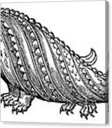 Boar Whale Canvas Print
