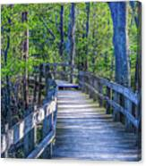 Boardwalk Going Into The Woods Canvas Print