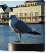 Boardwalk Seagull Canvas Print
