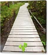 Boardwalk To Backguard Falls In British Columbia Canvas Print
