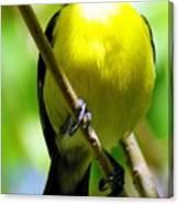 Boastful Bird Canvas Print