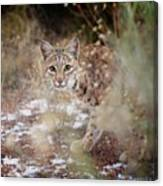 Bob On The Prowl Canvas Print