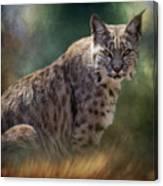 Bobcat Gaze Canvas Print