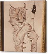 Bobcat Kitten Curiosity Canvas Print
